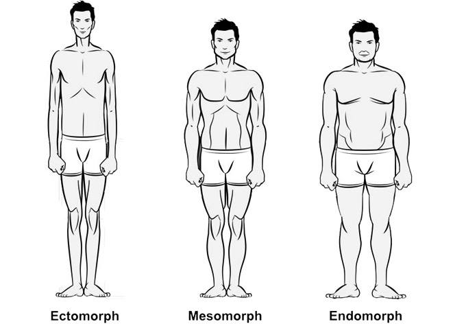 3 body types - Ectomorph, Mesomorph, Endomorph