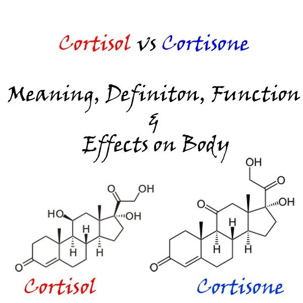 Cortisol vs Cortisone - Meaning, Definiton, Function & Effects on Body