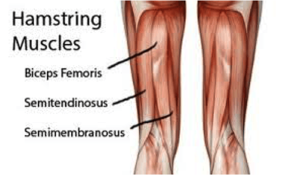 hamstring muscles worked with romanian deadlift