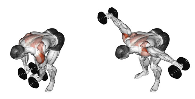 How to perform bent over lateral raise